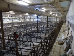 HyLife-Rosco Farm Gestation area sows moved out before renovation