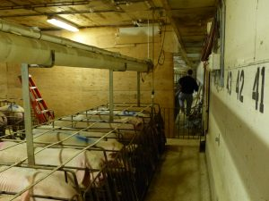 HyLife-Rosco Farm Gestation area with barrier wall being put in place at start of renovation
