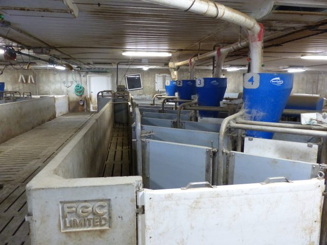 Schlegelhome Farms Inc one of 2 rows of 4 Canarm ESF feeding stations. Note the middle alleyway is used as a sorting area.